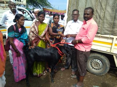Case story: I am glad that our awarded land will initiate the women's collective goat project.